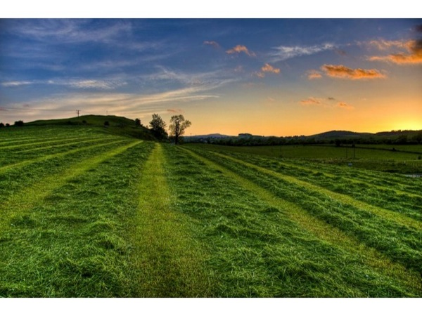 Picture of a green field