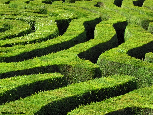A hedgerow maze