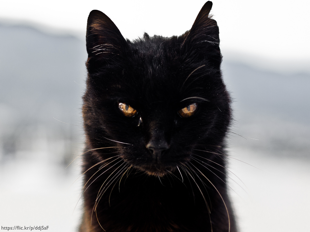 A black cat with a grumpy look on its face